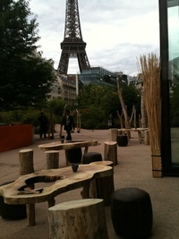 Driftwood furniture and stabilized trees for rent
