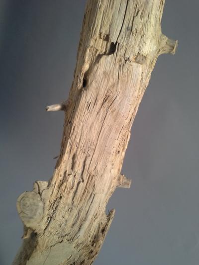 sculpture en bois flotté réf 119
