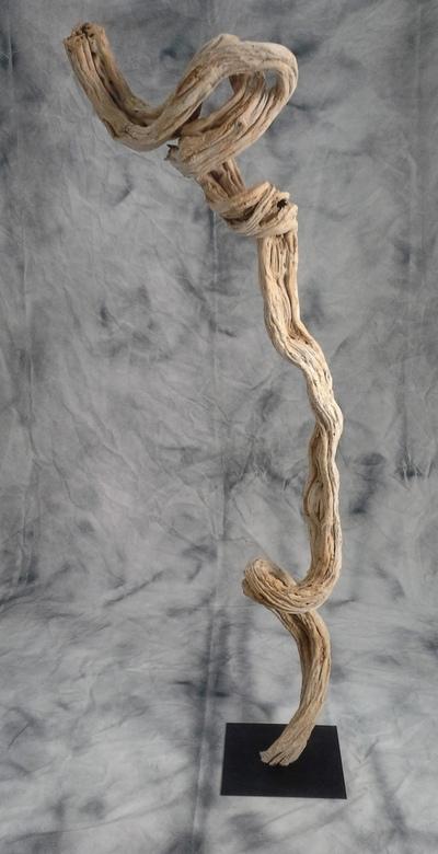 Liane amazonienne blanchie sur socle
