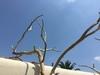 arbre mort ref 143