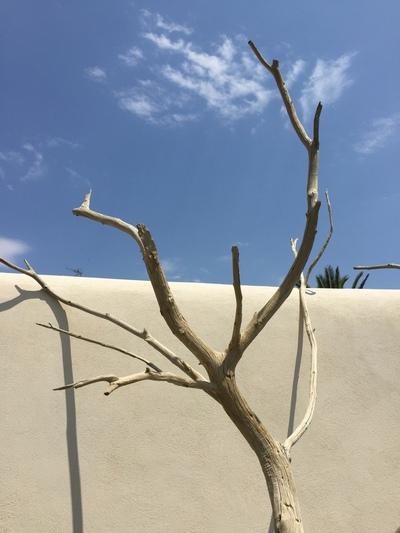 arbre mort ref 150