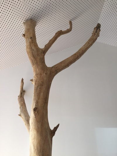 arbre en bois flotté dans un centre de loisir