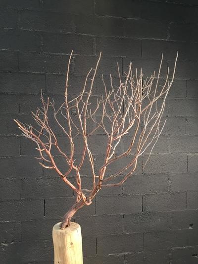 arbuste sur tronc en bois flotté