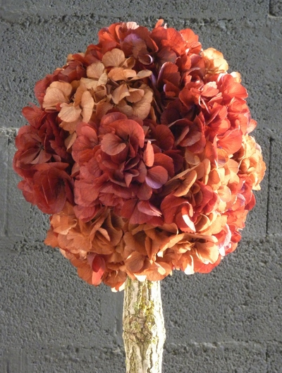 Arbuste hortensia orange/rouge