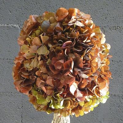Arbuste hortensia vert/marron