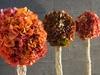 Topiaire hortensia vert/marron