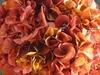 Topiaire hortensia rose/jaune