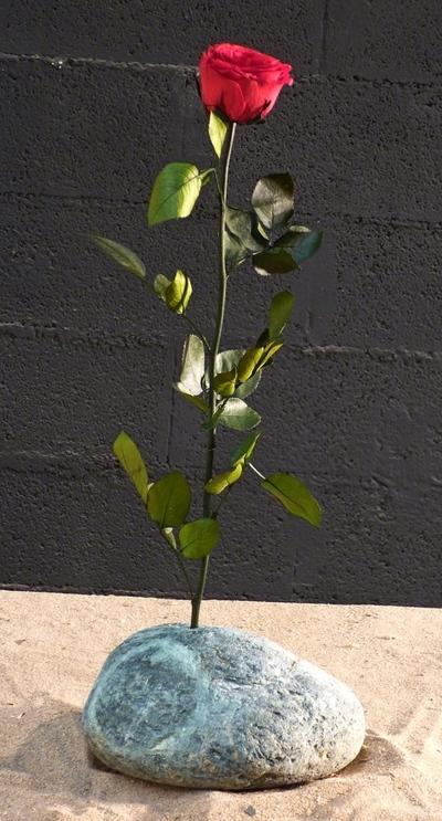 Une rose rouge sur piere verte