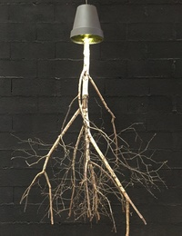 Birchwood chandelier