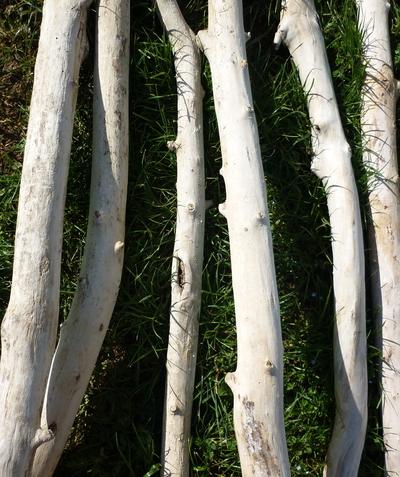 branche de bois flotté de 1m70 à 2m de 5cm à 7cm de diamètre