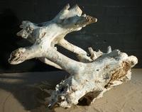 Stump ref259
