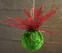 Red Fern Kokedama