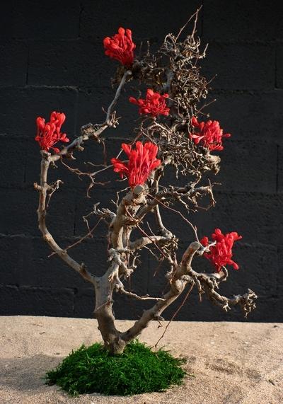 Arbre à fleurs rouge