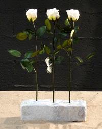 3 white roses on stone