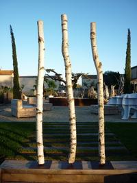 Birchwood trunks on steel base