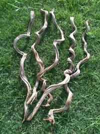 Natural Amazonian liana
