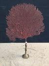 Gorgone rouge montée sur socle