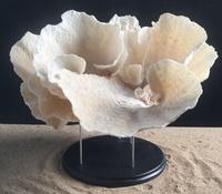 Corail cup monté sur socle