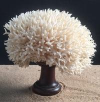 Corail nid 40cm monté sur socle