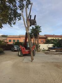 arbre mort ref 6288
