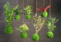 Kokedama en végétaux stabilisés Tree Fern ou autres végétaux stabilisés