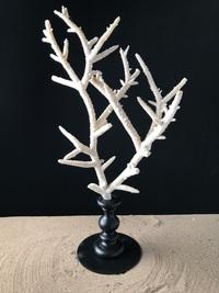 Corail branche 40cmx75cm