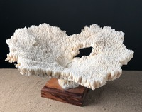 Corail table 58cm x50cm