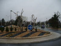 Driftwood trunks and stumps for a roundabout