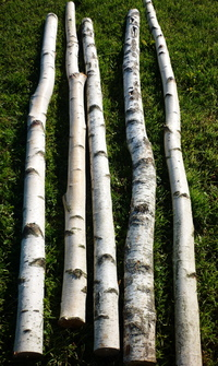 Birchwood trunks 2m long and 10cm diameter