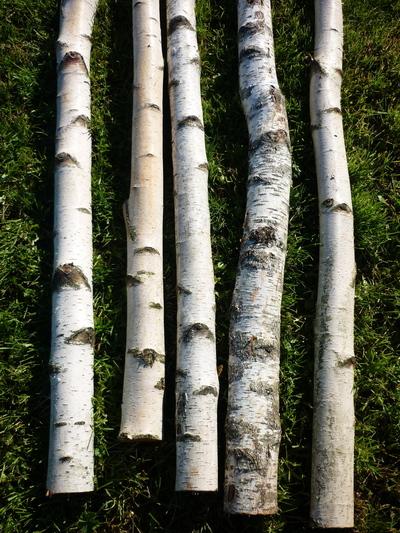 Troncs de bouleau de 2m40 en 10cm de diametre - Tronc de bouleau ...