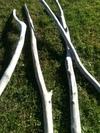 branche de 2m à 2m50 en 7 à 10cm de diamètre