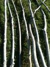 branche de 2m50 à 3m en 3 à 5cm de diamètre