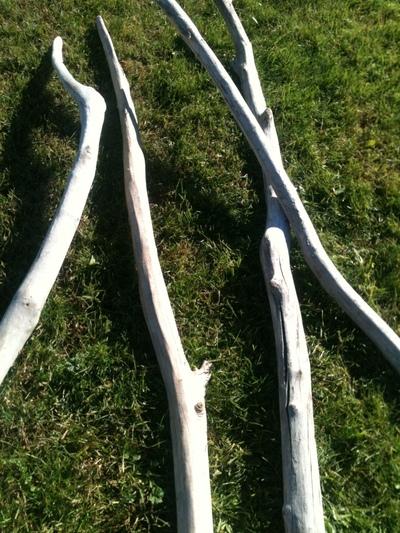 branche de 2m50 à 3m en 5 à 7cm de diamètre