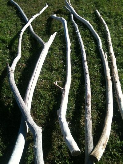 branche de 3 à 4m et en 5 à 7cm de diamètre