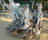 Stump ref492