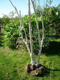 Tree ref 504