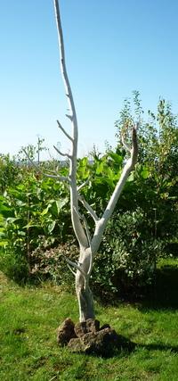 Tree ref 507