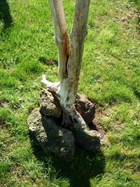 Tree ref 509