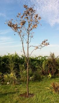 Dead tree ref 203