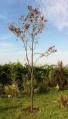arbre mort ref 203