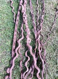 Natural wavy liana (180cm)