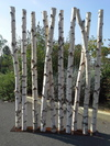 Paravent en troncs de bouleaux de 2m40 de hauteur en 10cm de diamètre