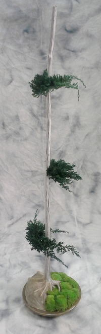 Bonzai with juniperus (2m high)