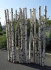 Paravent en S avec des troncs de bouleaux de 2m de hauteur et 5/7cm de diamètre