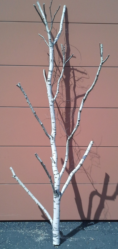 arbre bouleau ref 6