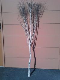 arbre bouleau ref 8