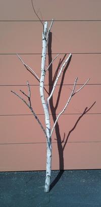 arbre bouleau ref 10
