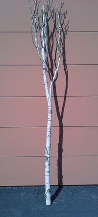 arbre bouleau ref 13