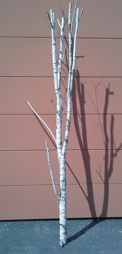 arbre bouleau la ref 3