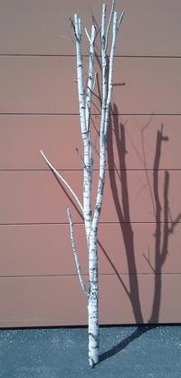 Birchwood tree ref 3